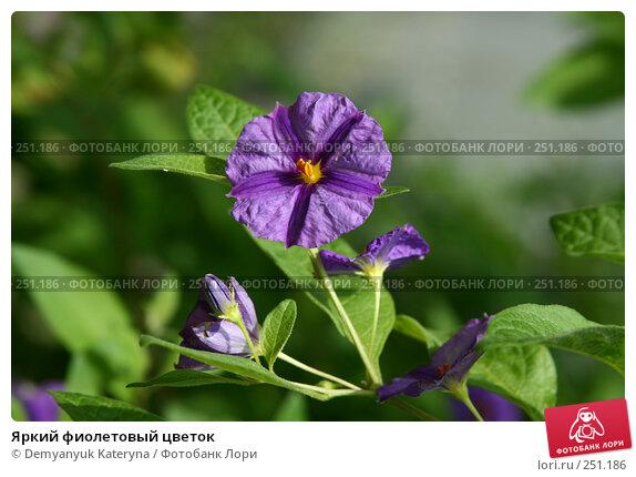 Яркий фиолетовый цветок, фото № 251186, снято 18 сентября 2007 г. (c) Demyanyuk Kateryna / Фотобанк Лори