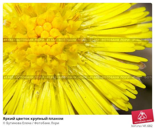 Яркий цветок крупный планом, фото № 41682, снято 16 апреля 2007 г. (c) Бутинова Елена / Фотобанк Лори