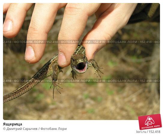 Ящерица, фото № 152418, снято 16 апреля 2005 г. (c) Дмитрий Сарычев / Фотобанк Лори