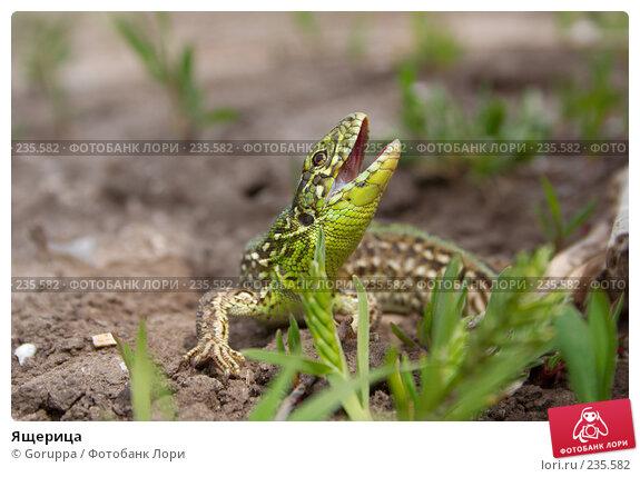 Ящерица, фото № 235582, снято 6 мая 2007 г. (c) Goruppa / Фотобанк Лори