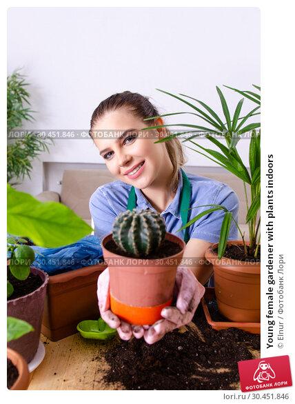 Young female gardener with plants indoors. Стоковое фото, фотограф Elnur / Фотобанк Лори