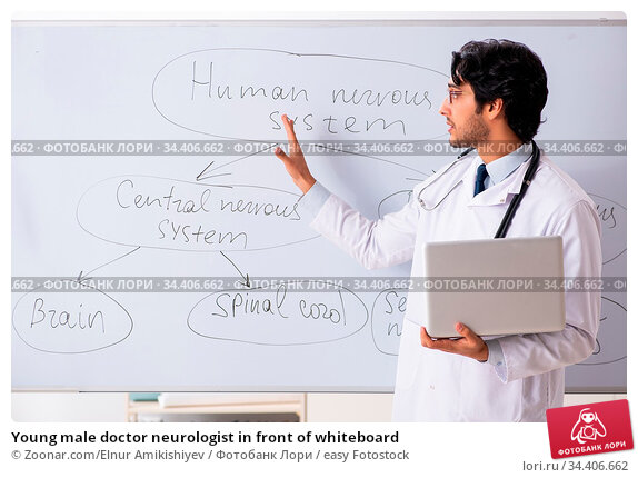 Young male doctor neurologist in front of whiteboard. Стоковое фото, фотограф Zoonar.com/Elnur Amikishiyev / easy Fotostock / Фотобанк Лори