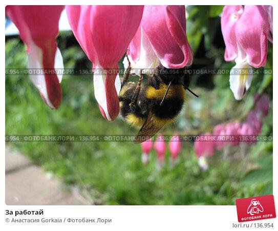 За работай, фото № 136954, снято 3 июня 2007 г. (c) Анастасия Gorkaia / Фотобанк Лори