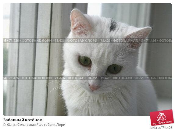 Забавный котёнок, фото № 71426, снято 7 августа 2007 г. (c) Юлия Смольская / Фотобанк Лори