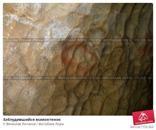 Заблудившийся мамонтенок, фото № 172322, снято 18 октября 2007 г. (c) Вячеслав Потапов / Фотобанк Лори