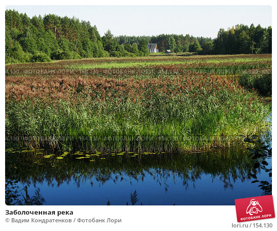 Заболоченная река, фото № 154130, снято 22 мая 2017 г. (c) Вадим Кондратенков / Фотобанк Лори