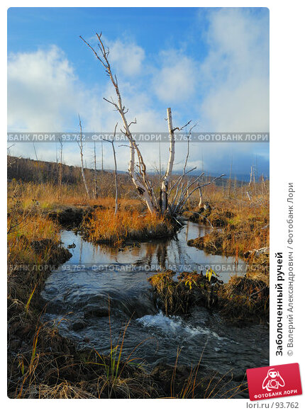 Заболоченный ручей, фото № 93762, снято 6 октября 2007 г. (c) Валерий Александрович / Фотобанк Лори