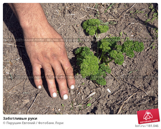 Заботливые руки, фото № 181046, снято 27 июня 2017 г. (c) Парушин Евгений / Фотобанк Лори