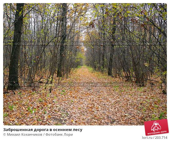 Заброшенная дорога в осеннем лесу, фото № 203714, снято 11 октября 2007 г. (c) Михаил Коханчиков / Фотобанк Лори
