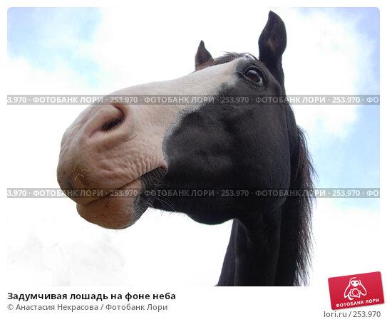 Купить «Задумчивая лошадь на фоне неба», фото № 253970, снято 6 октября 2007 г. (c) Анастасия Некрасова / Фотобанк Лори