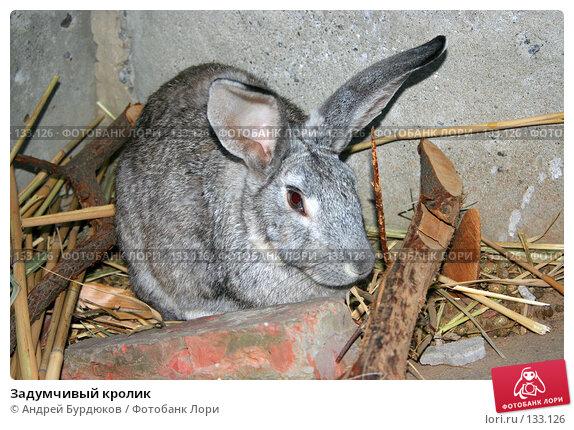 Задумчивый кролик, фото № 133126, снято 2 сентября 2005 г. (c) Андрей Бурдюков / Фотобанк Лори