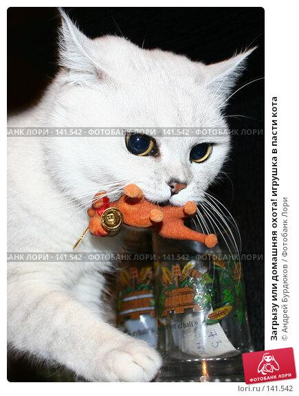 Загрызу или домашняя охота! игрушка в пасти кота, фото № 141542, снято 11 февраля 2006 г. (c) Андрей Бурдюков / Фотобанк Лори