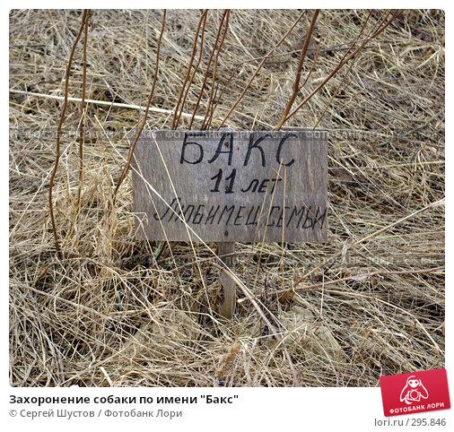 """Захоронение собаки по имени """"Бакс"""", эксклюзивное фото № 295846, снято 6 апреля 2008 г. (c) Сергей Шустов / Фотобанк Лори"""