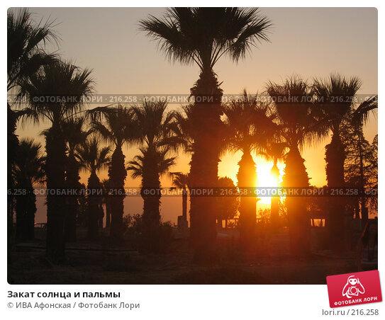 Закат солнца и пальмы, фото № 216258, снято 26 сентября 2007 г. (c) ИВА Афонская / Фотобанк Лори