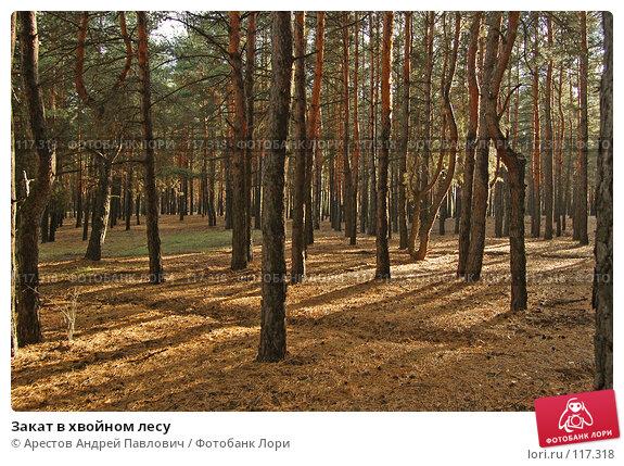Закат в хвойном лесу, фото № 117318, снято 4 ноября 2007 г. (c) Арестов Андрей Павлович / Фотобанк Лори