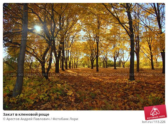 Закат в кленовой роще, фото № 113226, снято 20 октября 2007 г. (c) Арестов Андрей Павлович / Фотобанк Лори