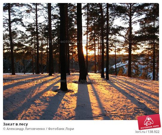 Закат в лесу, фото № 138922, снято 25 ноября 2007 г. (c) Александр Литовченко / Фотобанк Лори