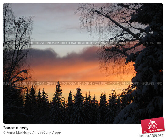 Закат в лесу, фото № 209982, снято 26 января 2008 г. (c) Anna Marklund / Фотобанк Лори