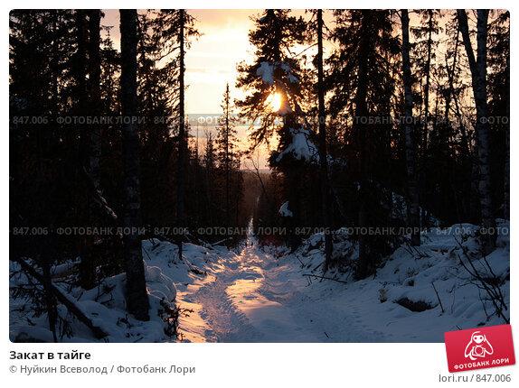 Закат в тайге. Стоковое фото, фотограф Нуйкин Всеволод / Фотобанк Лори