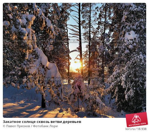 Закатное солнце сквозь ветви деревьев, фото № 18938, снято 16 февраля 2007 г. (c) Павел Преснов / Фотобанк Лори