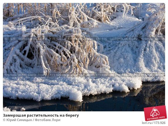 Замерзшая растительность на берегу, фото № 173926, снято 8 января 2008 г. (c) Юрий Синицын / Фотобанк Лори