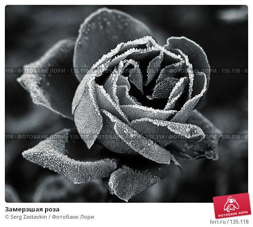 Замерзшая роза, фото № 135118, снято 15 сентября 2005 г. (c) Serg Zastavkin / Фотобанк Лори