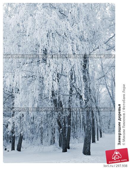 Замерзшие деревья, фото № 297938, снято 19 января 2008 г. (c) Максим Пименов / Фотобанк Лори