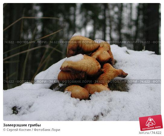 Замерзшие грибы, фото № 74622, снято 13 ноября 2003 г. (c) Сергей Костин / Фотобанк Лори