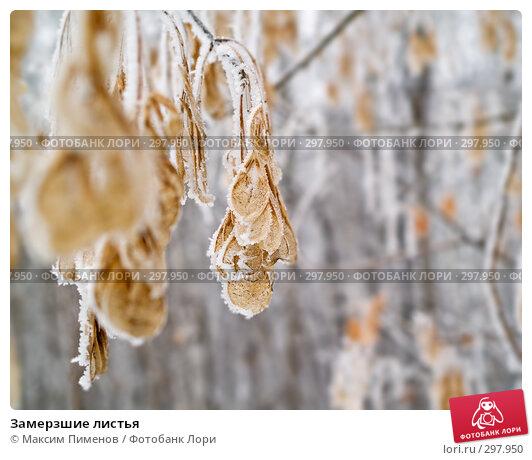 Купить «Замерзшие листья», фото № 297950, снято 19 января 2008 г. (c) Максим Пименов / Фотобанк Лори
