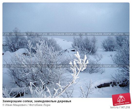 Замерзшие сопки, заиндевелые деревья, фото № 147218, снято 2 февраля 2006 г. (c) Иван Мацкевич / Фотобанк Лори