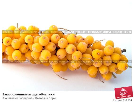 Замороженные ягоды облепихи, фото № 316434, снято 12 апреля 2006 г. (c) Анатолий Заводсков / Фотобанк Лори
