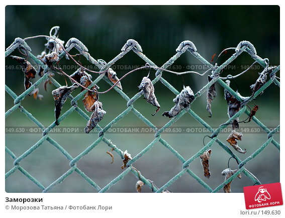 Купить «Заморозки», фото № 149630, снято 15 октября 2004 г. (c) Морозова Татьяна / Фотобанк Лори