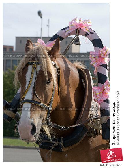 Запряженная лошадь, фото № 85026, снято 14 сентября 2007 г. (c) Ильин Сергей / Фотобанк Лори