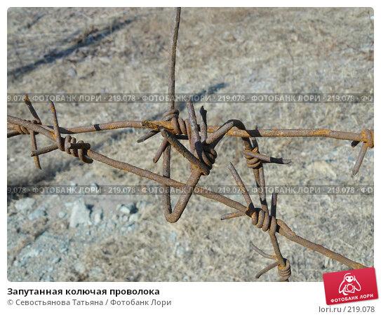 Запутанная колючая проволока, фото № 219078, снято 27 июня 2007 г. (c) Севостьянова Татьяна / Фотобанк Лори