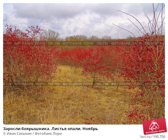 Заросли боярышника. Листья опали. Ноябрь, фото № 195750, снято 13 ноября 2004 г. (c) Иван Сазыкин / Фотобанк Лори