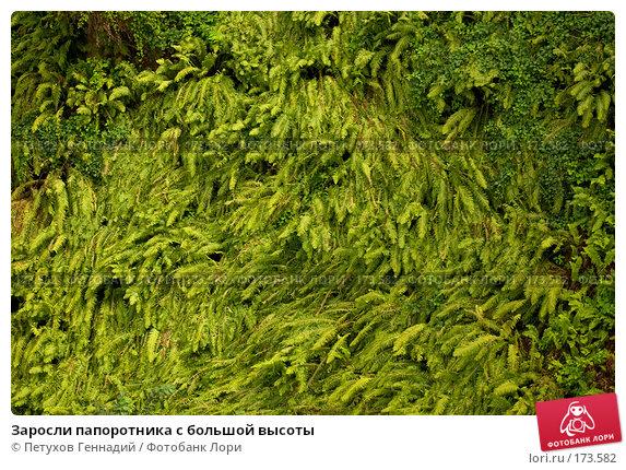 Купить «Заросли папоротника с большой высоты», фото № 173582, снято 16 августа 2007 г. (c) Петухов Геннадий / Фотобанк Лори