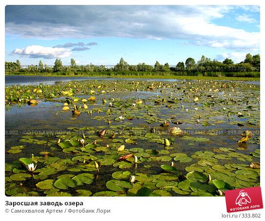 Заросшая заводь озера, фото № 333802, снято 24 мая 2017 г. (c) Самохвалов Артем / Фотобанк Лори