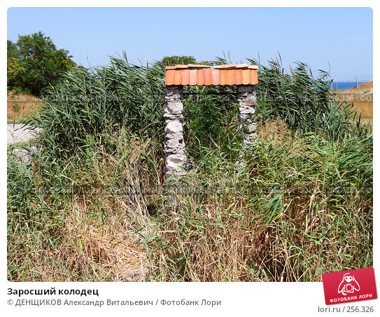 Заросший колодец, фото № 256326, снято 10 августа 2007 г. (c) ДЕНЩИКОВ Александр Витальевич / Фотобанк Лори