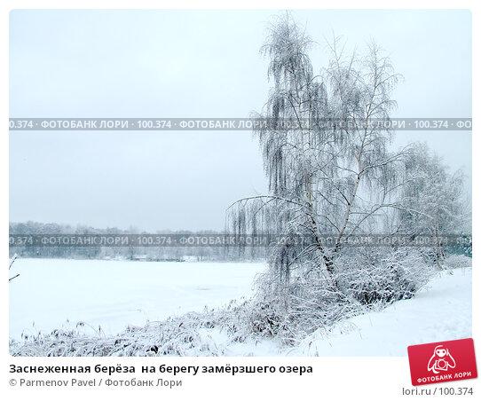 Заснеженная берёза  на берегу замёрзшего озера, фото № 100374, снято 15 февраля 2007 г. (c) Parmenov Pavel / Фотобанк Лори