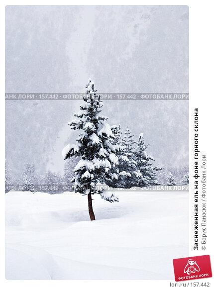 Купить «Заснеженная ель на фоне горного склона», фото № 157442, снято 13 декабря 2007 г. (c) Борис Панасюк / Фотобанк Лори