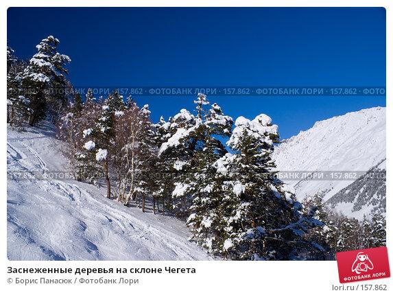 Заснеженные деревья на склоне Чегета, фото № 157862, снято 15 декабря 2007 г. (c) Борис Панасюк / Фотобанк Лори