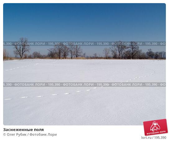 Заснеженные поля, фото № 195390, снято 28 января 2008 г. (c) Олег Рубик / Фотобанк Лори