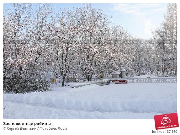 Заснеженные рябины, фото № 137130, снято 4 декабря 2007 г. (c) Сергей Девяткин / Фотобанк Лори
