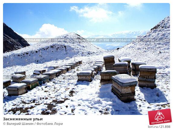 Купить «Заснеженные ульи», фото № 21898, снято 21 ноября 2006 г. (c) Валерий Шанин / Фотобанк Лори