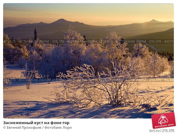Заснеженный куст на фоне гор, фото № 215370, снято 8 января 2008 г. (c) Евгений Прокофьев / Фотобанк Лори