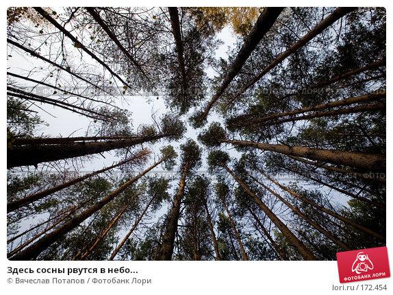 Здесь сосны рвутся в небо..., фото № 172454, снято 19 октября 2007 г. (c) Вячеслав Потапов / Фотобанк Лори