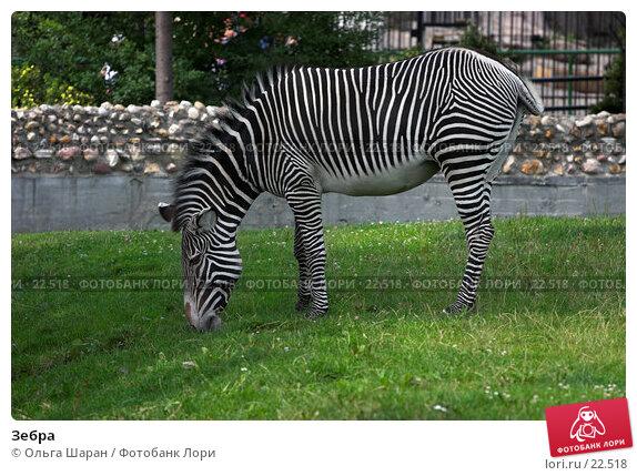 Купить «Зебра», фото № 22518, снято 25 июля 2006 г. (c) Ольга Шаран / Фотобанк Лори