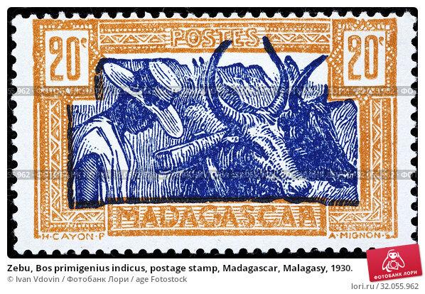 Zebu, Bos primigenius indicus, postage stamp, Madagascar, Malagasy, 1930. (2013 год). Редакционное фото, фотограф Ivan Vdovin / age Fotostock / Фотобанк Лори