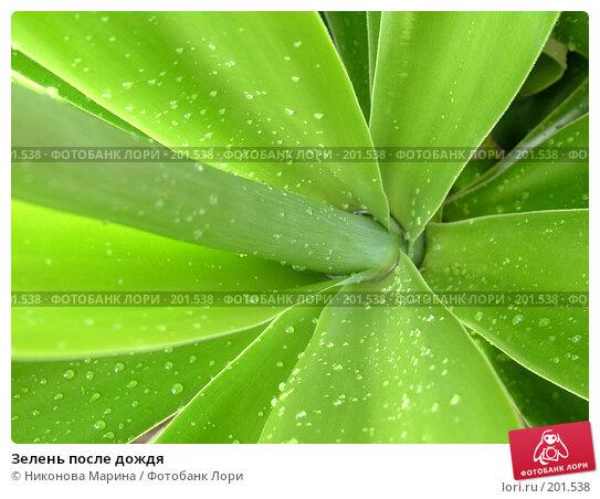 Зелень после дождя, фото № 201538, снято 7 февраля 2005 г. (c) Никонова Марина / Фотобанк Лори