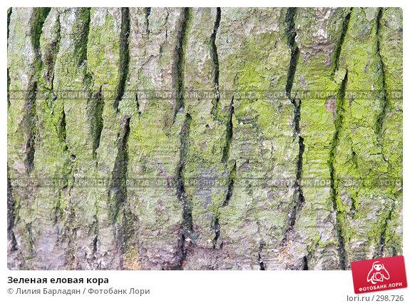 Зеленая еловая кора, фото № 298726, снято 8 апреля 2008 г. (c) Лилия Барладян / Фотобанк Лори